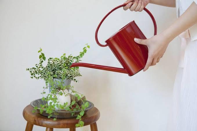 Wees niet slordig als je je kamerplanten water geeft